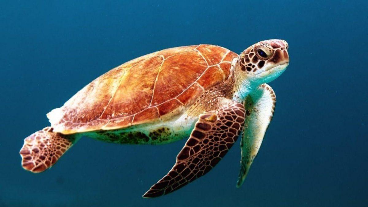 Diez adultos y nueve niños mueren tras comer carne de tortuga marina