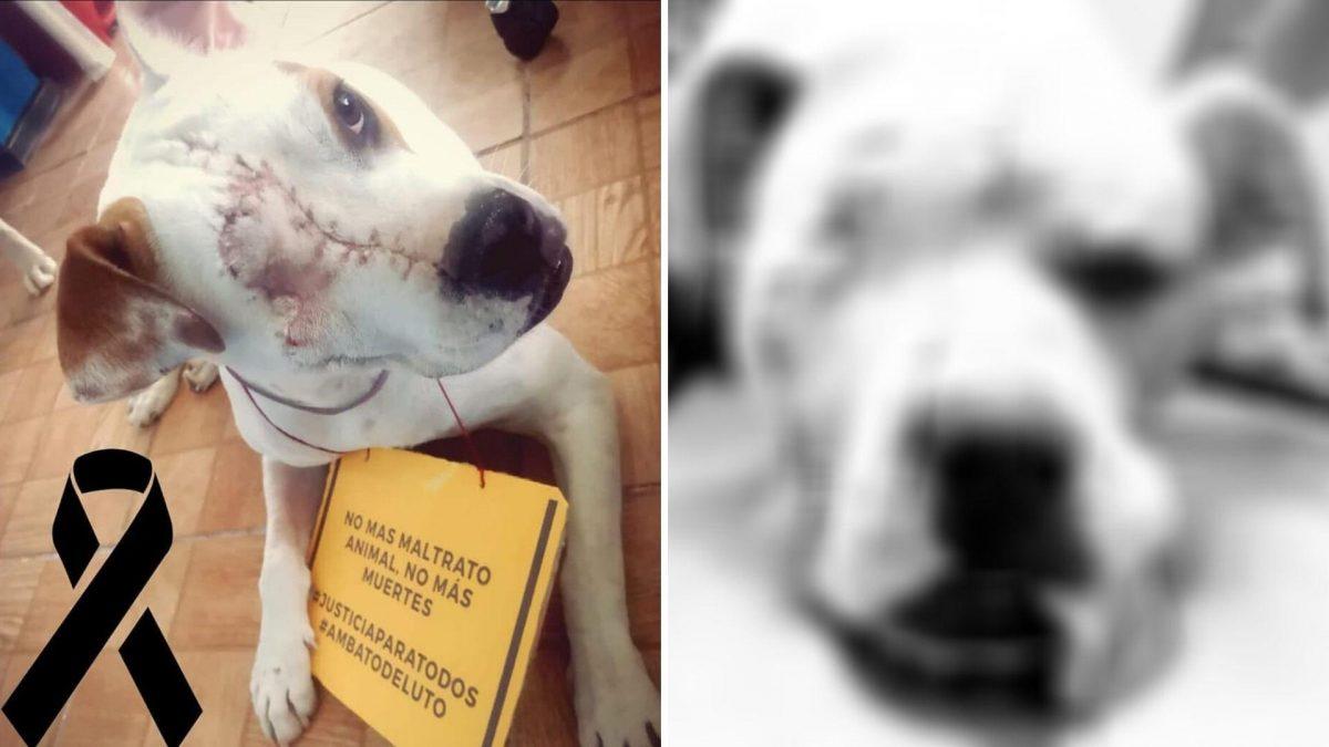 Presentarán denuncia contra el presunto agresor del Valiente, el can herido a machetazos