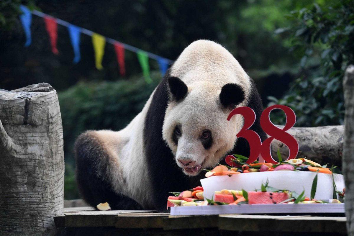 Muere Xin Xing, la osa panda más vieja del mundo