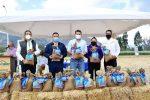 INIAP presenta nueva variedad de avena para productores de la Sierra