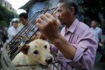 Debido al coronavirus miles de perros se  salvan en China
