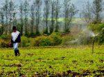 Presidente Moreno entregará títulos de propiedad y créditos agropecuarios a familias en Napo