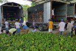 Agricultores de Napo recibirán títulos de tierra, créditos y serán parte de un convenio para el desarrollo agroproductivo