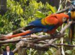 VIDEO | Varios centros de fauna silvestre reabrieron sus puertas en Pastaza