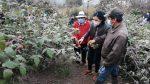 Productores siguen recibiendo ayuda para reactivar el agro por el Gobierno Nacional tras caída de ceniza del Sangay