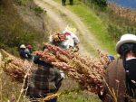 Ministerio de Agricultura y Ganadería  realiza el III Congreso de la Quinua, alimento ancestral en Ecuador