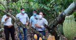 El Gobierno reconoce la nueva variedad de cacao Pincay