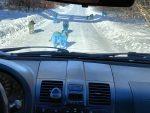 Aparición de perros azules asombra a los habitantes de una ciudad rusa