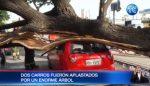 VIDEO | Un enorme árbol aplastó dos carros