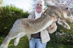 Ofrecen más de mil dólares de recompensa tras robo de un conejo gigante