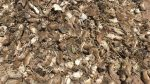 Una apocalíptica plaga de ratones aterroriza a Australia