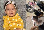 Bebé muere tras ser atacada por los dos perros de su papá