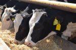 """Un caso del mal de las """"vacas locas"""" detectado en Inglaterra"""