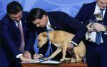 El presidente de Brasil promulga Ley contra maltrato animal y hace que su perro firme la nueva legislación