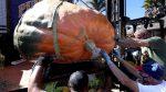 FOTOS | Un hombre en Estados Unidos gana concurso con su calabaza gigante