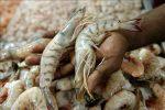 """Cancillería del Ecuador confirmó que fue superado el problema del camarón con China: se continuará con los """"protocolos que sean necesarios"""" en la exportación al mercado mundial."""