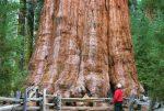 Protegen al árbol más grande del mundo en medio de un incendio forestal en California