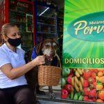 VIDEO: Asaltan a perro que hace entregas a domicilio en Colombia