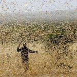 VIDEO | Brasil declara estado de emergencia en dos estados por posible llegada de plaga de langostas