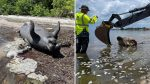 Olor putrefacto y 800 toneladas de peces muertos en Florida