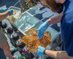 30 nuevas especies de invertebrados descubiertas en las islas Galápagos