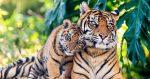 Incautaron cueros de tigres y yaguaretes en un zoológico