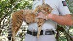 Investigadores colocaron cámaras y GPS en los collares de gatos domésticos